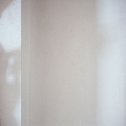 Photograph of shadow on white wall. Soft organic shadow on left side.